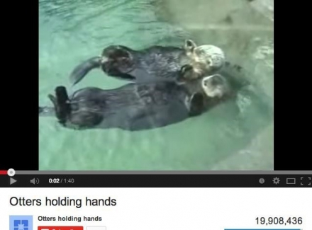 Screenshot of the youtube video of otters holding hands