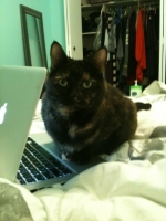 A cat sitting next to a laptop